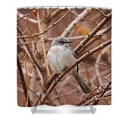 Perching On A Winter's Day  Shower Curtain