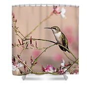 Perching Ruby-throated Hummingbird Shower Curtain