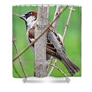 Perching Sparrow Shower Curtain