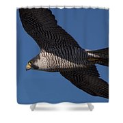 Peregrine 1 Shower Curtain