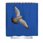 Peregrine Falcon I Shower Curtain