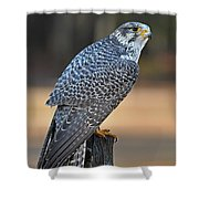 Peregrine Falcon Perched Shower Curtain
