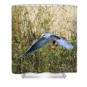 Peregrine Falcon Trips Shower Curtain