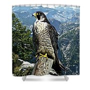 Peregrine Falcon, Yosemite Valley, Western Sierra Nevada Mountain, Echo Ridge Shower Curtain