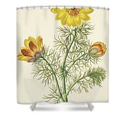 Perennial Adonis Shower Curtain