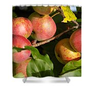 Perfect Apples Shower Curtain