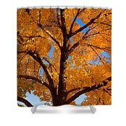 Perfect Autumn Day With Blue Skies Shower Curtain