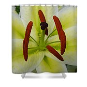 Perfect Beauty Shower Curtain