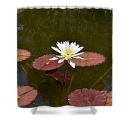 Perfect Lily  Shower Curtain