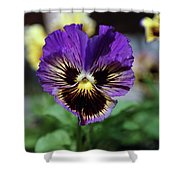 Perfect Pansy  Shower Curtain