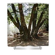 Perfect Picnic Tree Shower Curtain