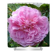 Perfect Pink Rose Shower Curtain