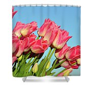 Perfect Pink Tullips Shower Curtain