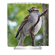 Perfect Profile - Chipping Sparrow Shower Curtain