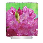 Perfect Purple Shower Curtain