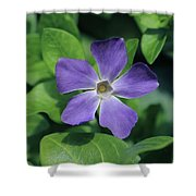 Perfect Purple Periwinkle Shower Curtain