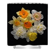 Perfect Ring Of Daffodils Shower Curtain