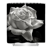 Perfect Rose In Black And White Shower Curtain