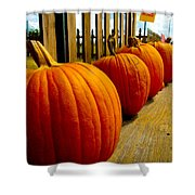 Perfect Row Of Pumpkins Shower Curtain