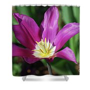 Perfect Single Dark Pink Tulip Flower Blossom Blooming Shower Curtain