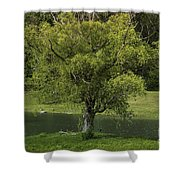 Perfect Tree Swing Shower Curtain