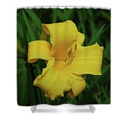 Perfect Yellow Daylily Flowering In A Garden Shower Curtain