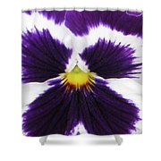 Perfectly Pansy 01 Shower Curtain