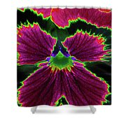 Perfectly Pansy 01 - Photopower Shower Curtain