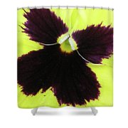 Perfectly Pansy 05 Shower Curtain