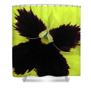 Perfectly Pansy 06 Shower Curtain