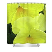 Perfectly Pansy 09 Shower Curtain