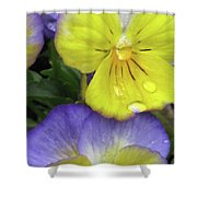 Perfectly Pansy 11 Shower Curtain