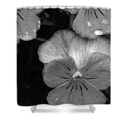 Perfectly Pansy 12 - Bw - Water Paper Shower Curtain