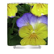 Perfectly Pansy 12 Shower Curtain
