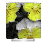 Perfectly Pansy 13 - Bw - Yellow Shower Curtain