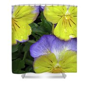 Perfectly Pansy 13 Shower Curtain