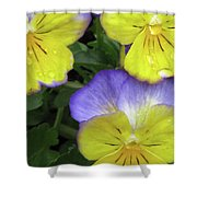 Perfectly Pansy 14 Shower Curtain