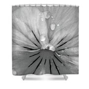 Perfectly Pansy 15 - Bw - Water Paper Shower Curtain