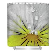 Perfectly Pansy 16 - Bw - Yellow Shower Curtain