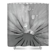 Perfectly Pansy 17 - Bw Shower Curtain