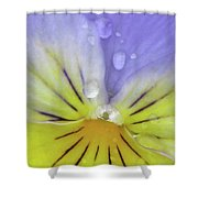 Perfectly Pansy 17 Shower Curtain