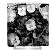 Perfectly Pansy 18 - Bw - Water Paper Shower Curtain