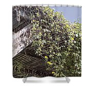 Pergola And Vines Shower Curtain