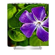 Periwinkle At Pilgrim Place In Claremont-california Shower Curtain