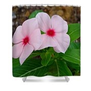 Periwinkle Flower 2 Shower Curtain