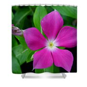 Periwinkle Flower Shower Curtain