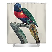 Perruche A Tete Bleue, Male / Rainbow Lorikeet, Male - Restored 19th Cent. Illustration By Barraband Shower Curtain