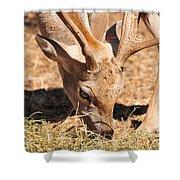 Persian Fallow Deer Shower Curtain