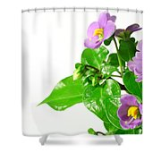 Persian Violets Shower Curtain