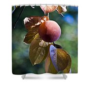 Persimmon Tree Shower Curtain